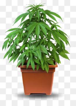 Выращивание марихуаны конопли скачать аниме конопли
