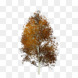 зеленое лиственное дерево, ствол березы крупный древесный мусор ... | 260x260